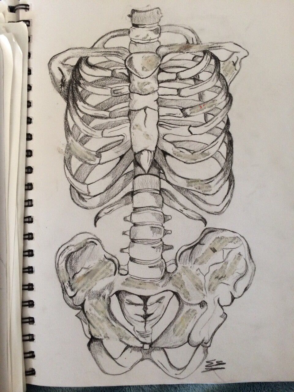 hight resolution of skeleton torso in charcoal