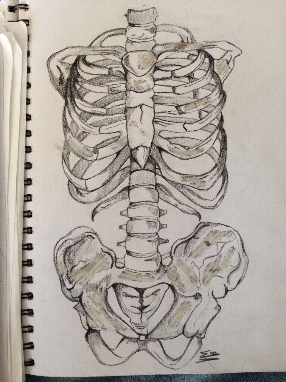 medium resolution of skeleton torso in charcoal