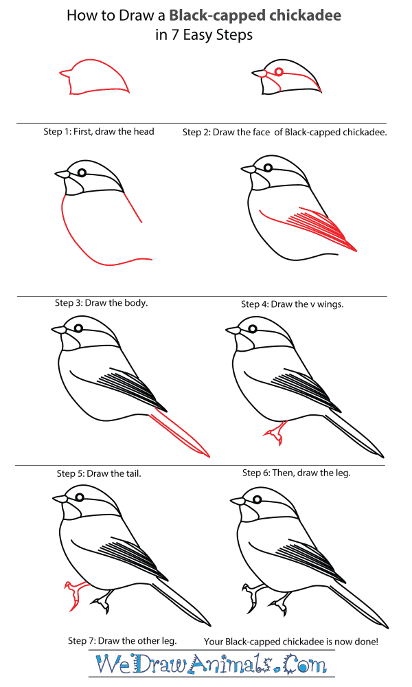 "5 /""L Bird beak hat frame"