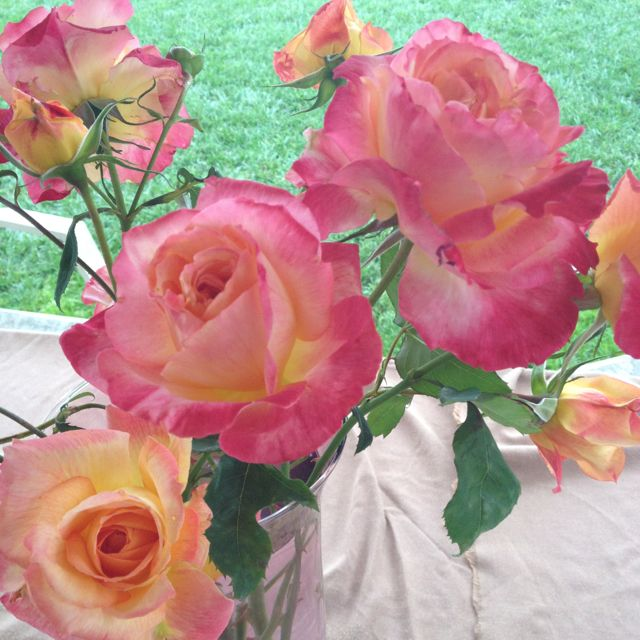 Beautiful hand picked roses from my garden. San Diego is a beautiful place to live. Such a lucky girl!