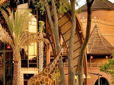 Disney S Animal Kingdom Villas Kidani Orlando Florida Hotel Watch Giraffes Graze From Your Room How Awesome Is That