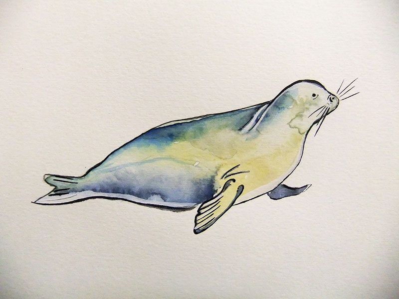Seal Original Watercolor Painting Painting Original