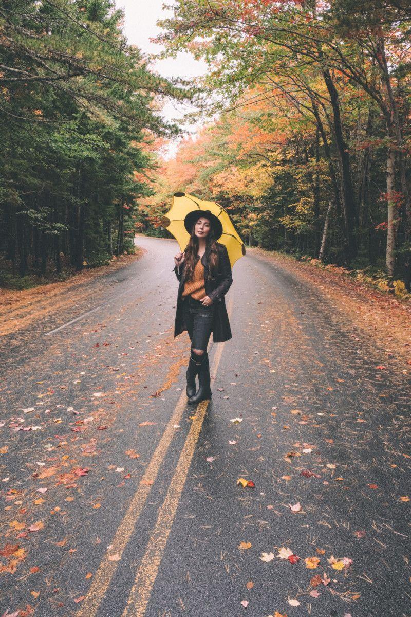 Autumn's Final Breath in Acadia Maine - She's So Bright ...