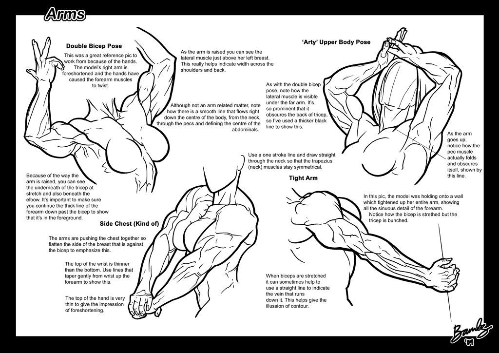Page 2 of the Arms Tutorial. Muscular female anatomy comic or ...