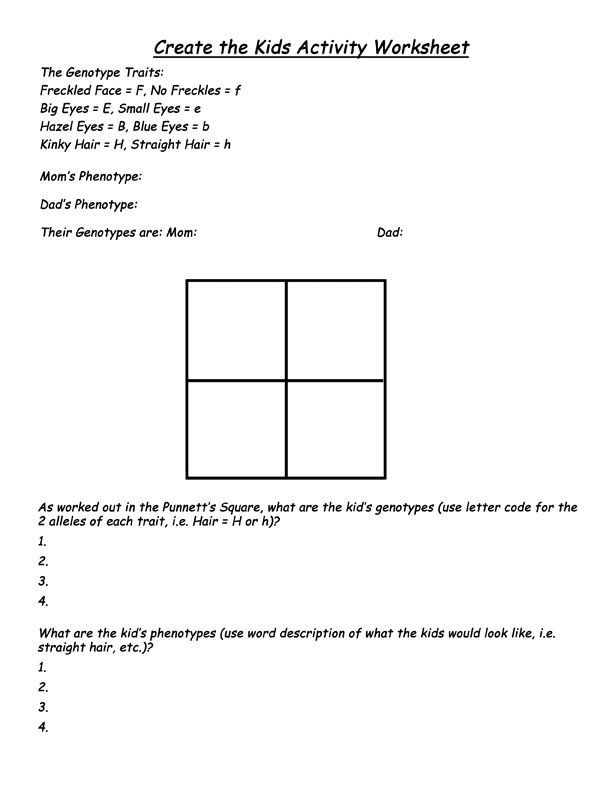 Spongebob Punnett Square Worksheet – Punnett Square Worksheet