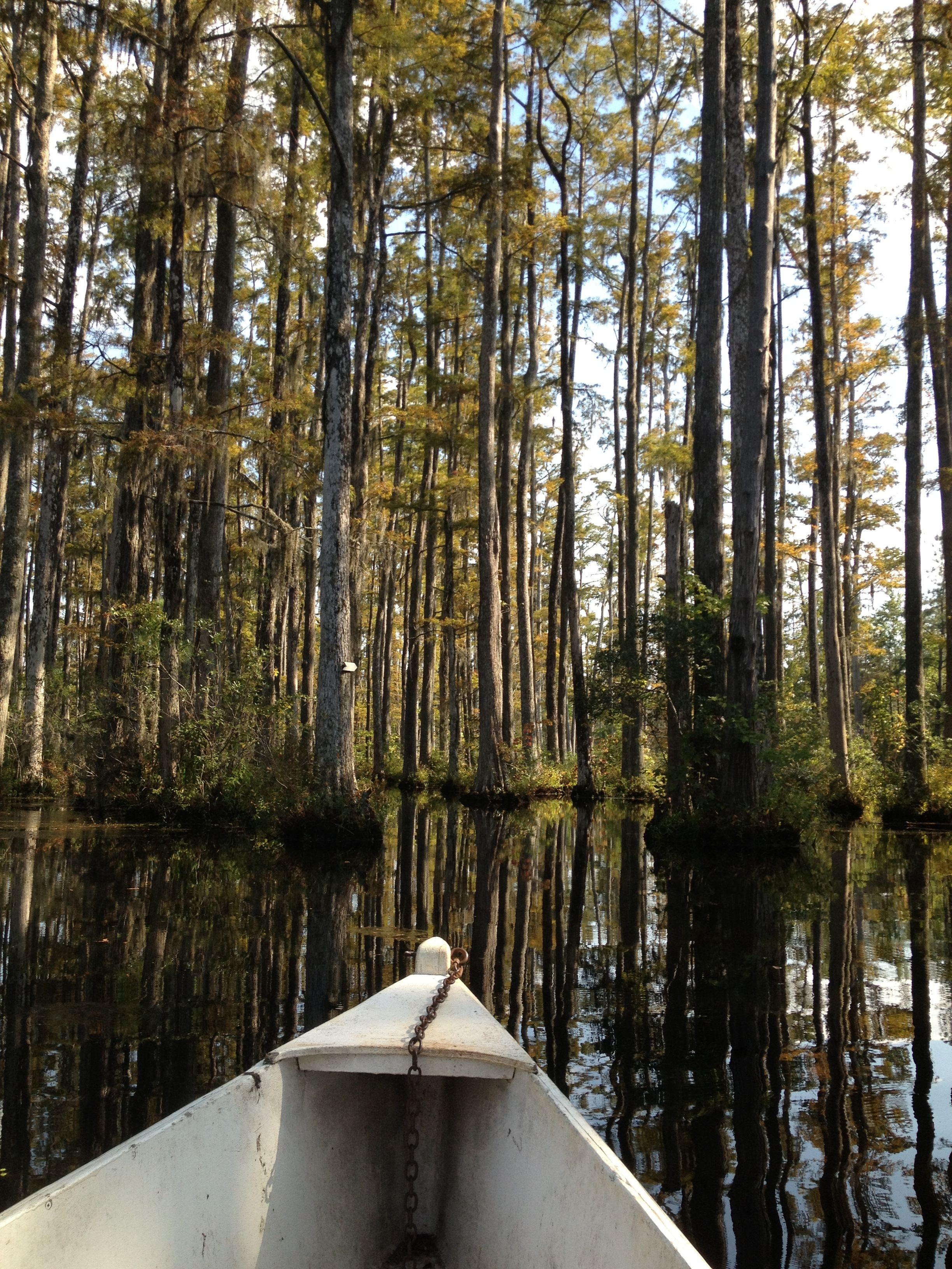 Cypress Garden, SC   Traveller   Pinterest   Scenery and Vacation