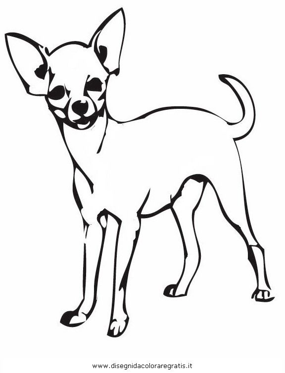 Chihuahua Coloring Pages Bing Images Dog Coloring Page Animal Coloring Books Colorful Drawings