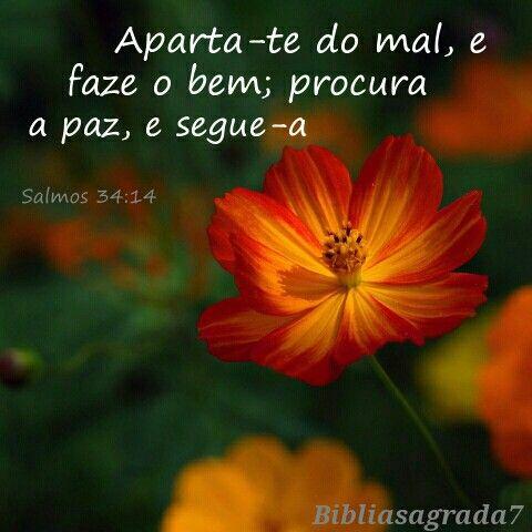Salmos 34 14 Aparta Te Do Mal Faze O Bem Procura A Paz E