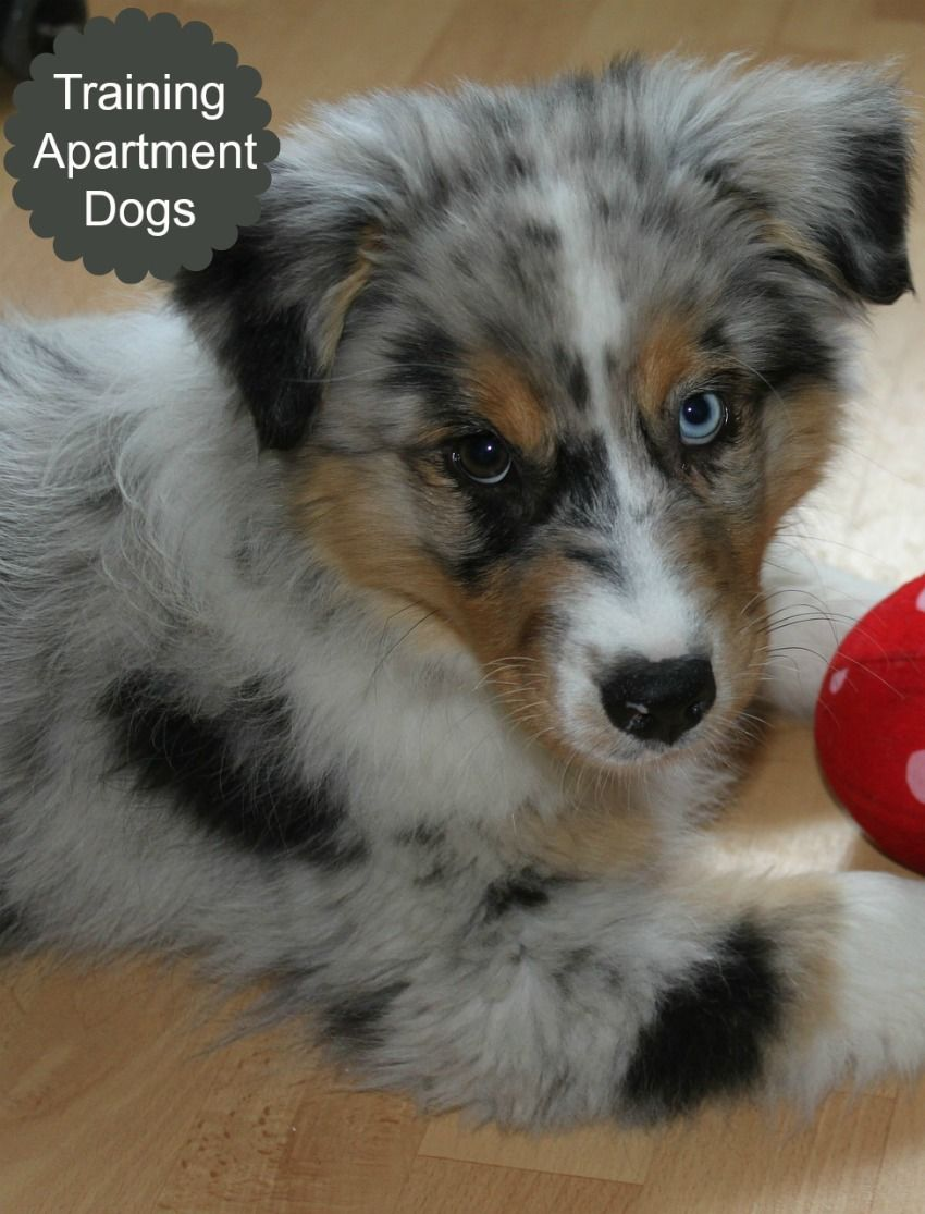 Five Ways To Make Your Apartment Dog Friendly Dog Vills Dog Friends Apartment Dogs Dog Trainer