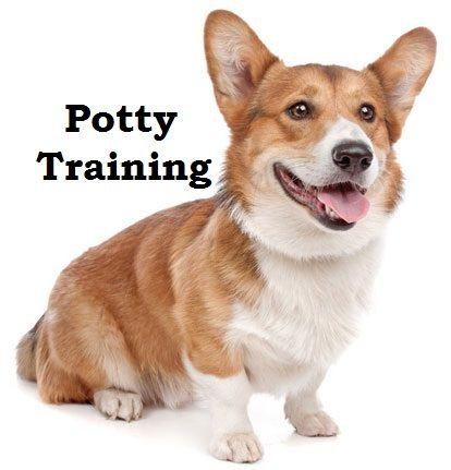 Corgi Puppies How To Potty Train A Corgi Puppy Corgi House Training Tips Housebreaking Corgi Puppies Fast Potty Training Puppy Dog Potty Training Corgi Dog