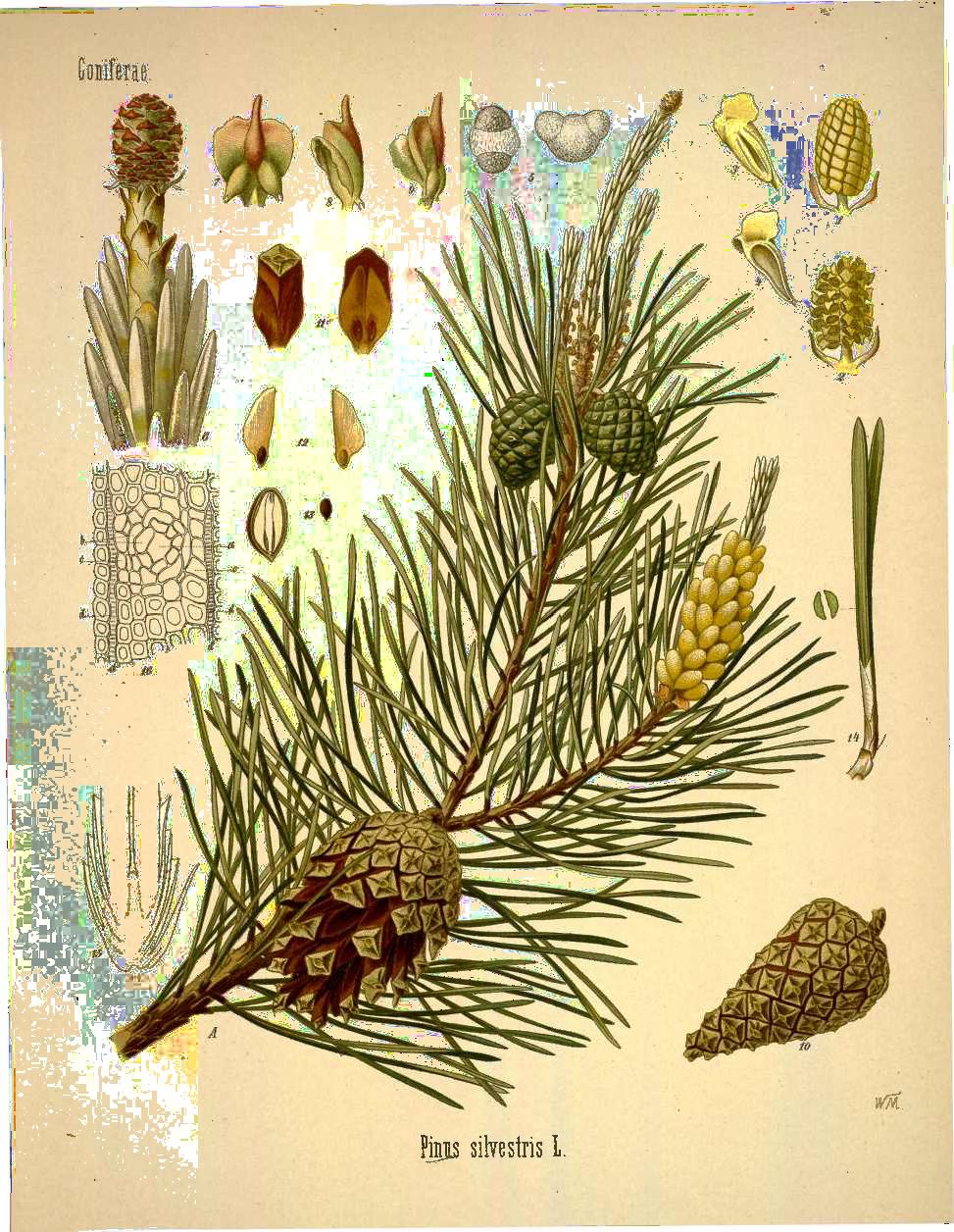 Pin On Botanical Plates