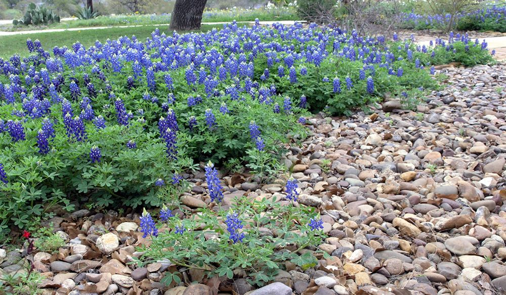 How To Make A Flower Bed Into A River Rock Garden