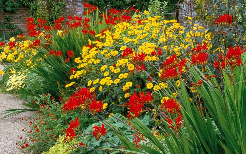 Beautiful Summer Borders