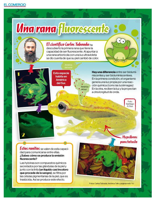 Infografía: Ranas / Revista Pandilla / EL COMERCIO (Ecuador) autor ...