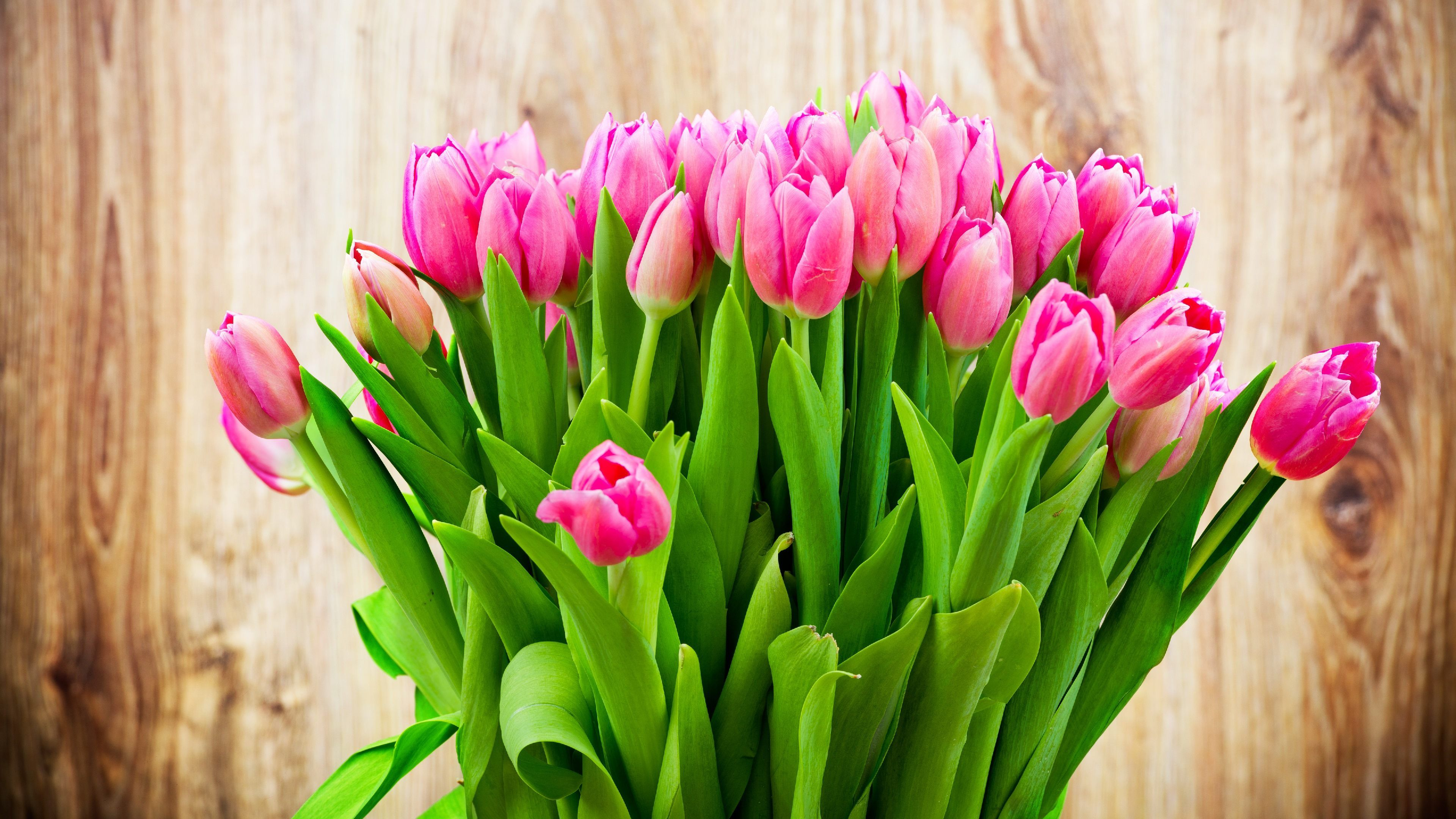 Tulip Flowers HD Wallpapers free download | HD Wallpapers ... for Green And Pink Flower Wallpaper  75tgx