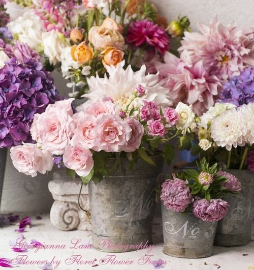Spring buckets of flowers pinks and purples yard party house buckets of flowers pinks and purples yard party house warming mightylinksfo Choice Image