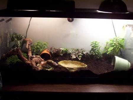 Giant african land snail tank setup google search for Snails in fish tank