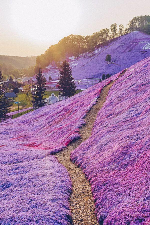 Los 10 lugares más bellos de Japón – Avenly Lane Travel