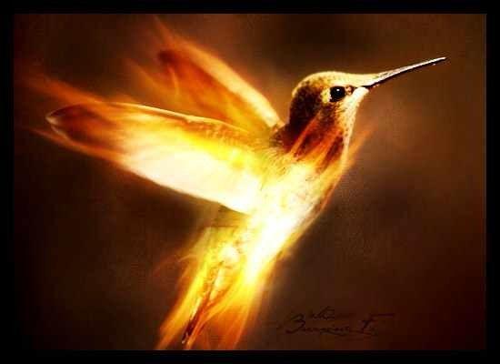 Humming Bird Fire Art Flame Art Fire Eyes
