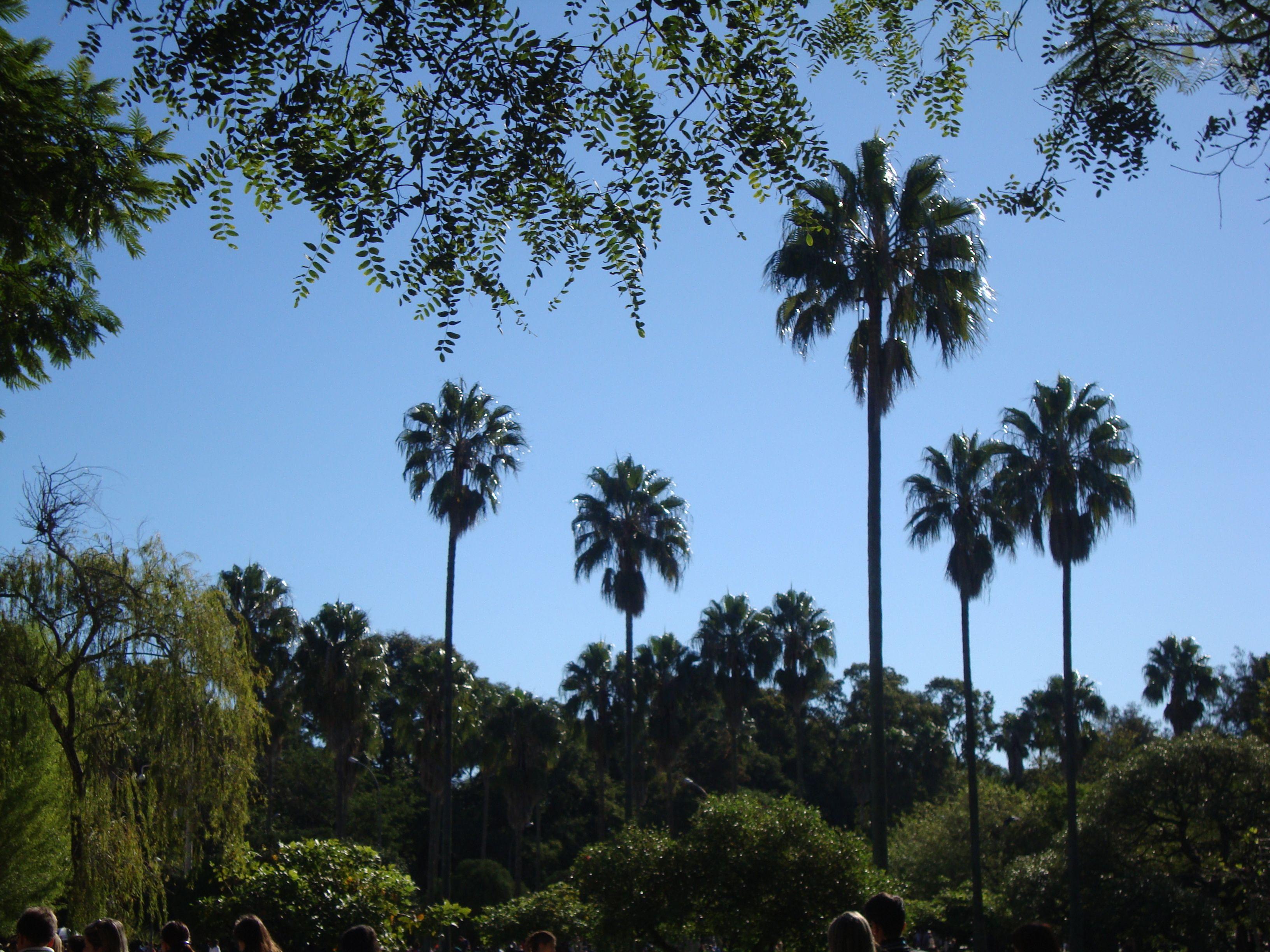 Parque Farroupilha, mais conhecido como Parque da Redenção. Porto Alegre/RS Fotografado por mim.