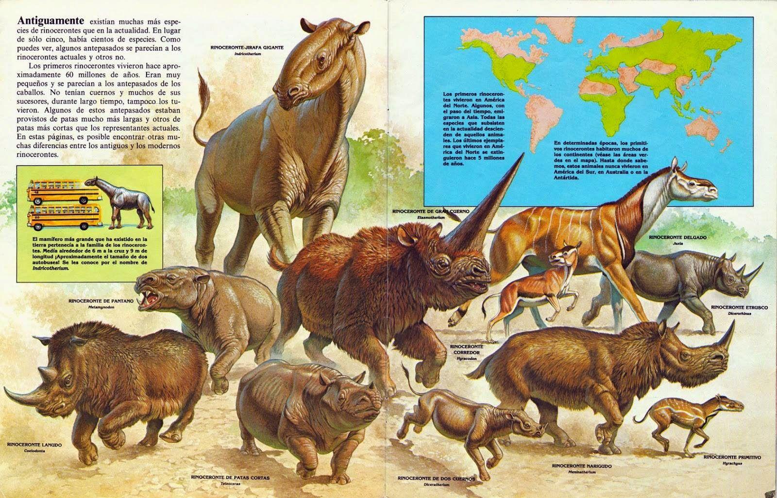 Rinocerontes Prehistoric Wildlife Extinct Animals Prehistoric Animals