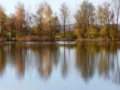 Water, Lake, Perach, Badesee