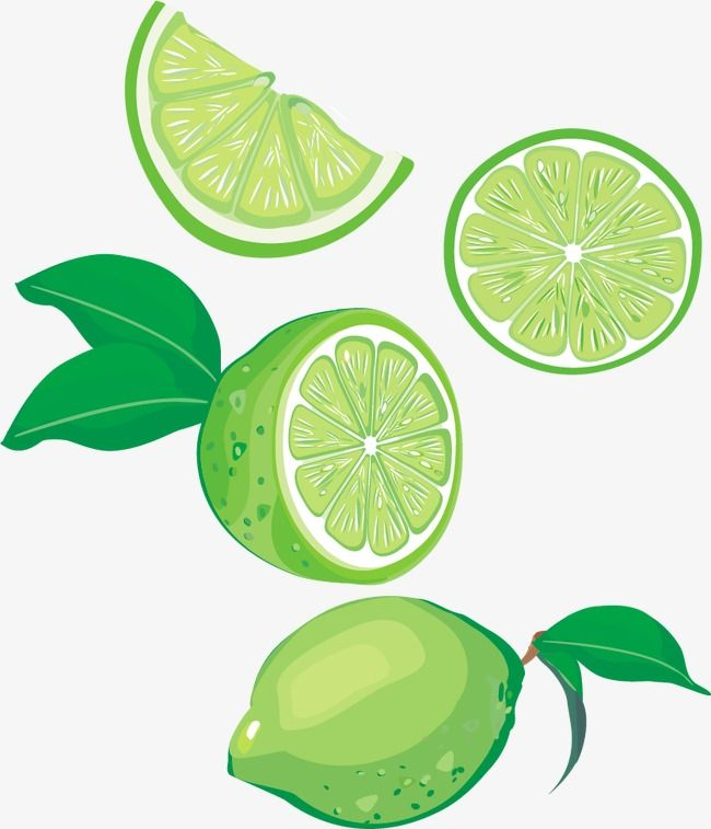 Lime Vector Png And Vector Lime Vector Fruits Drawing Lemon Drawing