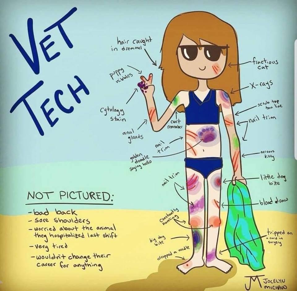 Pin on Veterinary Humor