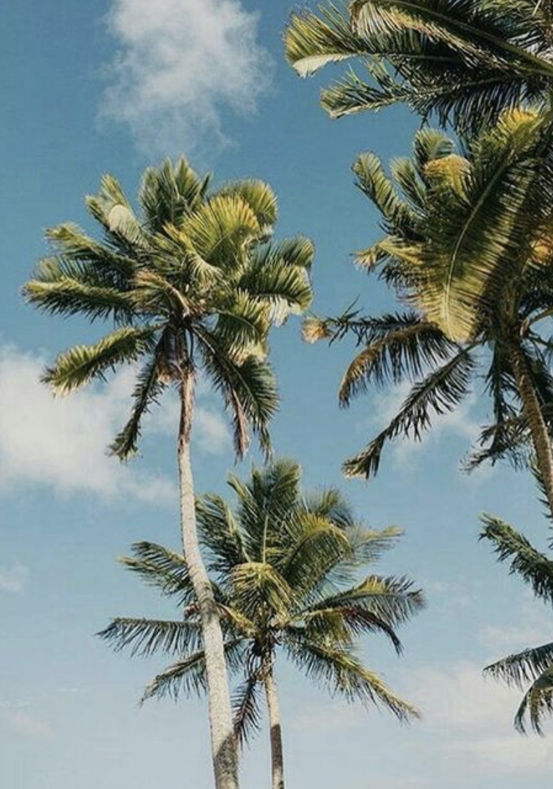 Palm Tree Aesthetic California And Hawaii Photography Palmtrees California Beachpicture Palm Tree Photography Palm Trees Wallpaper California Palm Trees