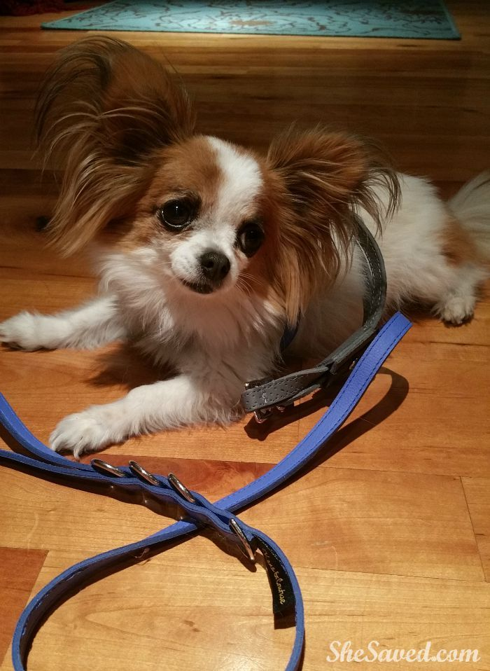 Kane Couture Review Functional Accessories For Dogs Cute Dog