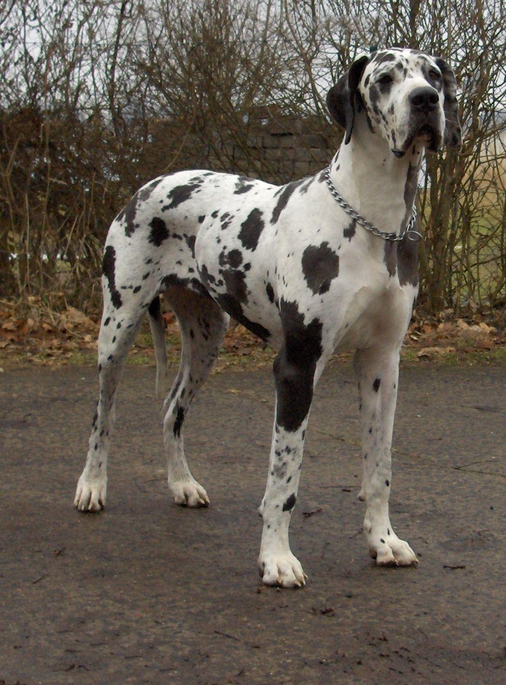 Learn About Dog Training Or Grooming Germanshepherddogtraining