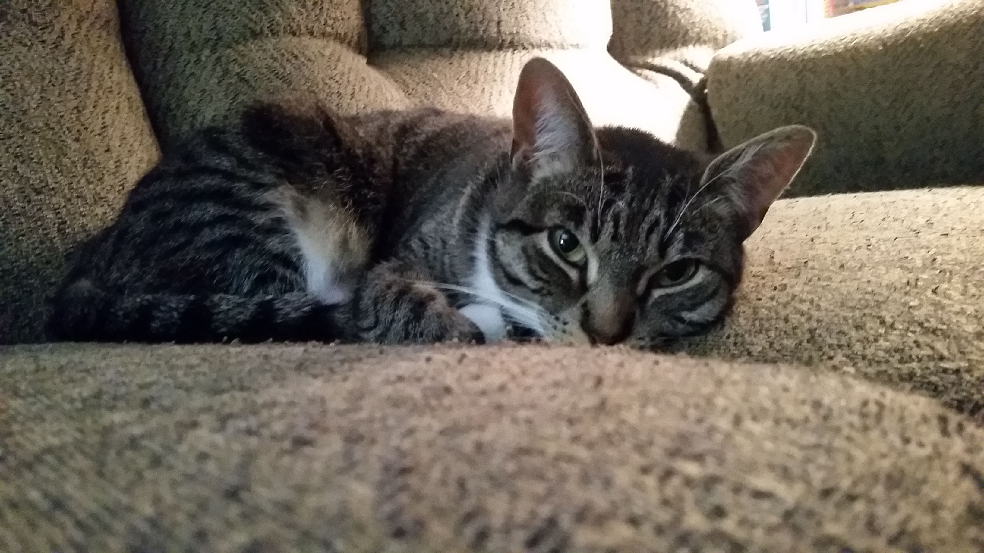 My cat Chloe! Cute cats, Cats, Animals