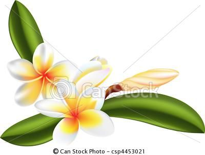 Vector Clip Art Of Frangipani Or Plumeria Flower Illustration Of Beautiful Csp4453021 Search Clipart Flower Illustration Flower Outline Plumeria Flowers
