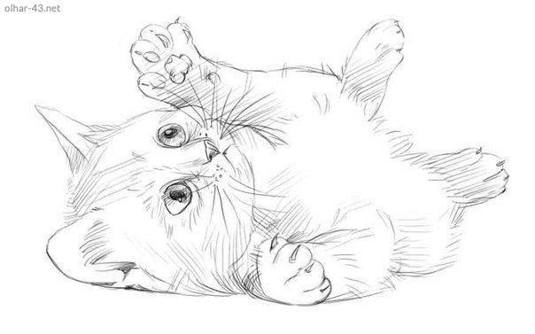 Aprenda Neste Post Como Desenhar Um Gato Passo A Passo O