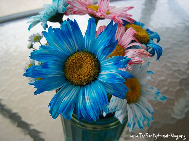 Use food coloring to dye your flowers through capillary action of how to dye flowers using food coloring to match your party decor via the party animal mightylinksfo