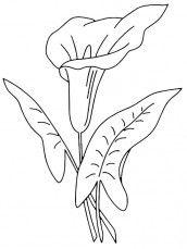 Flores Bonitas Para Colorir E Imprimir Flores Faciles De Dibujar