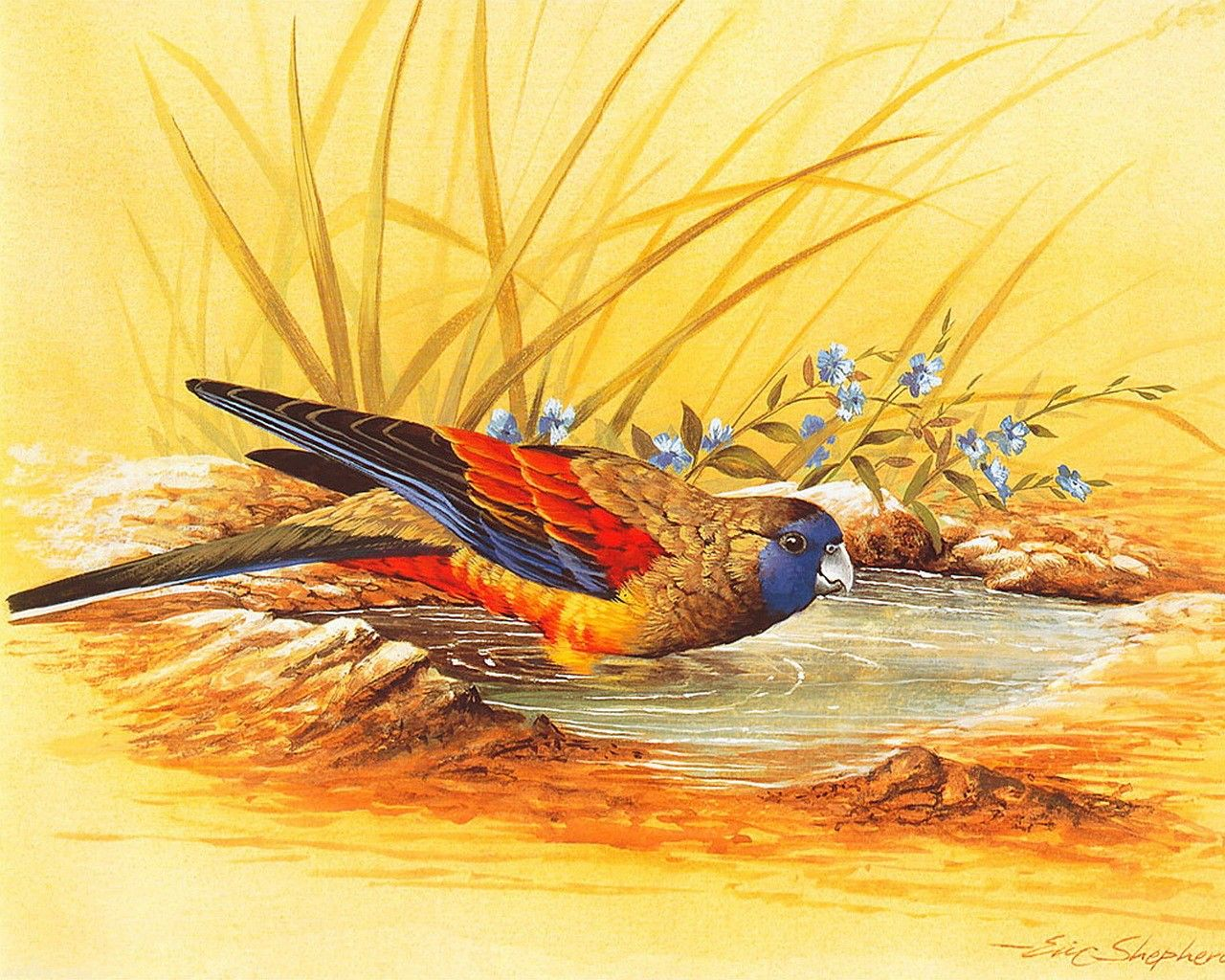 картинки иллюстрации птиц раньше