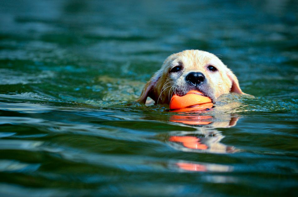 This Dog Just Realized He Can Touch The Bottom Cute Baby Animals Com Dog Friendly Beach Dog Beach Indian River County