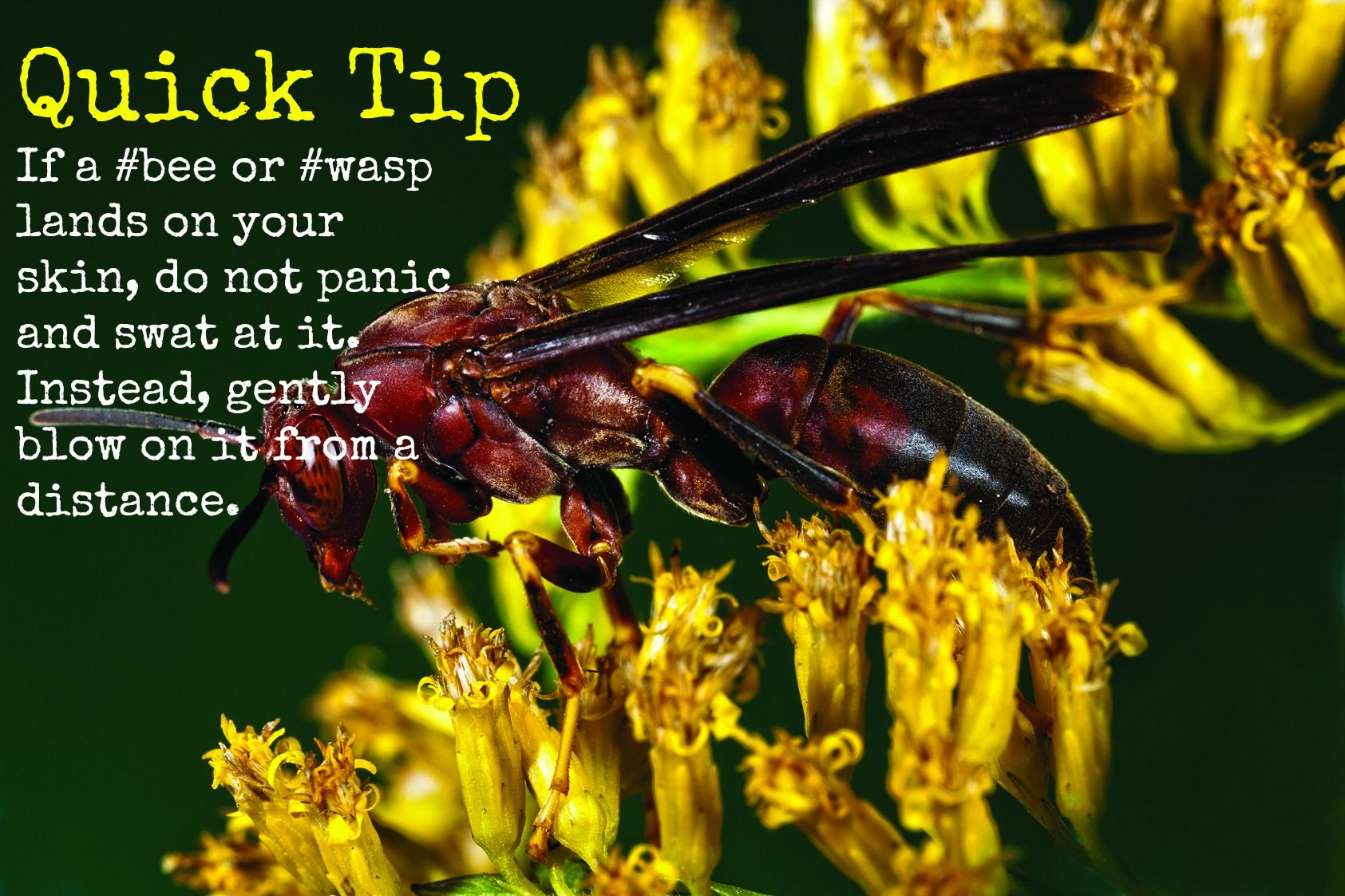 How to avoid a sting wasp pests diy pest control