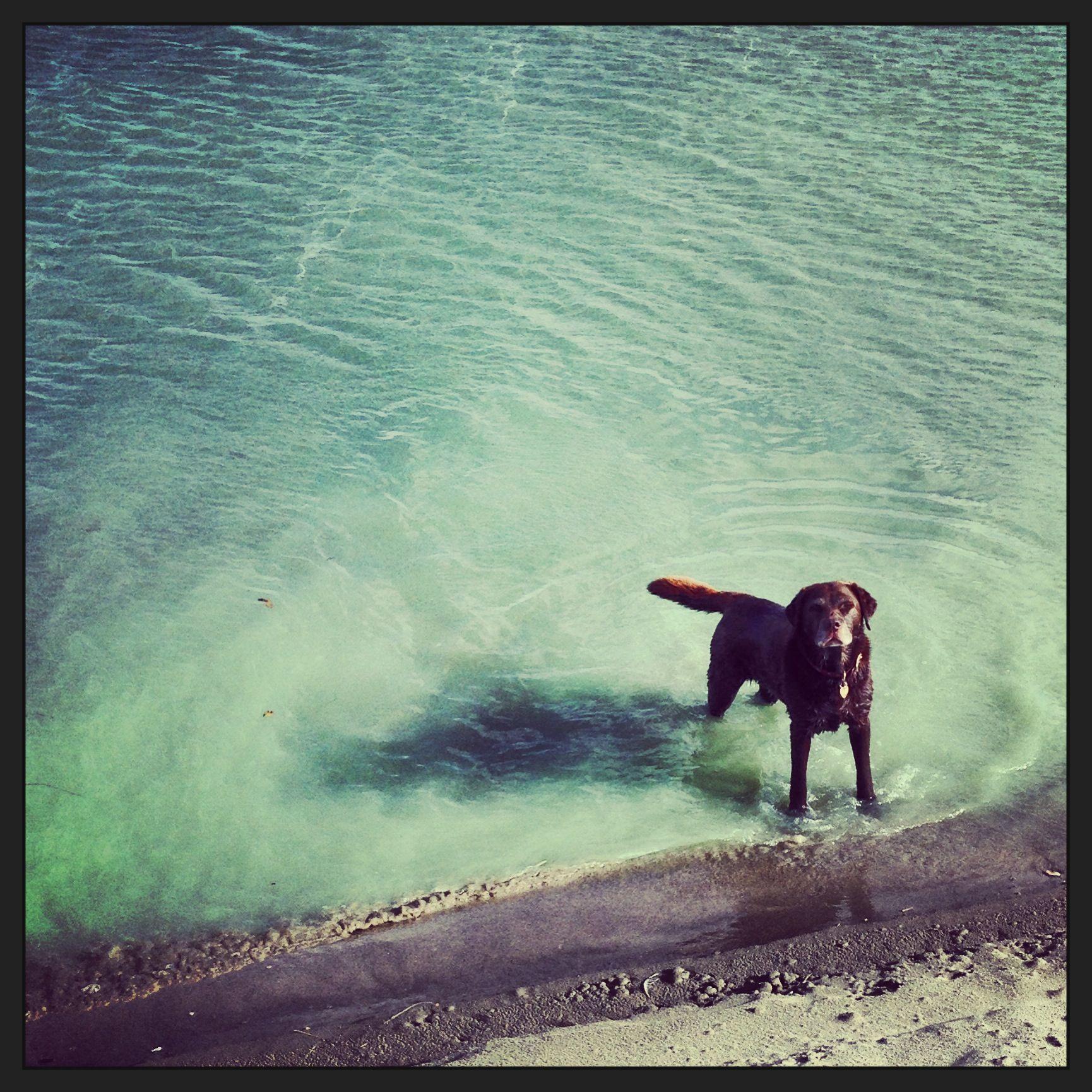The english sea and a small dog.