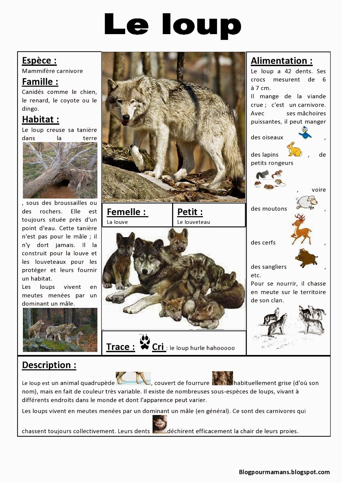 Fiche loup hiver pinterest animaux foret loup et animaux - Modele de loup a imprimer ...