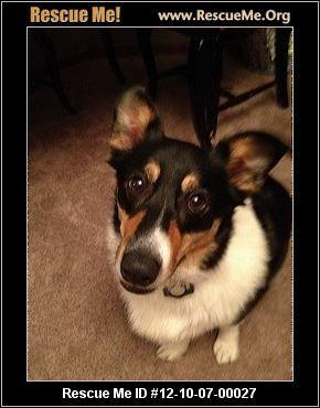 Ohio Corgi Rescue Adoptions Rescueme Org Corgi Rescue Corgi Cute Dogs