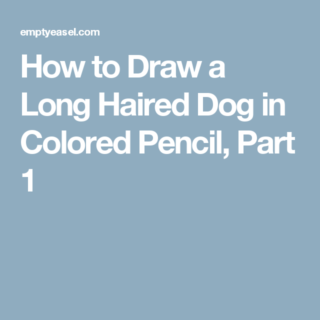 How to Draw a Long Haired Dog in Colored Pencil, Part 1