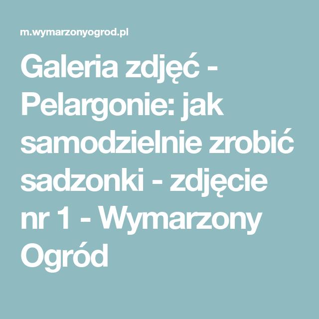 Galeria Zdjec Pelargonie Jak Samodzielnie Zrobic Sadzonki Zdjecie Nr 1 Wymarzony Ogrod