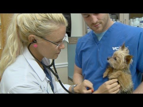 Where To Find Free Or Cheaper Vets Pet Insurance Reviews Cat Illnesses Dog Health
