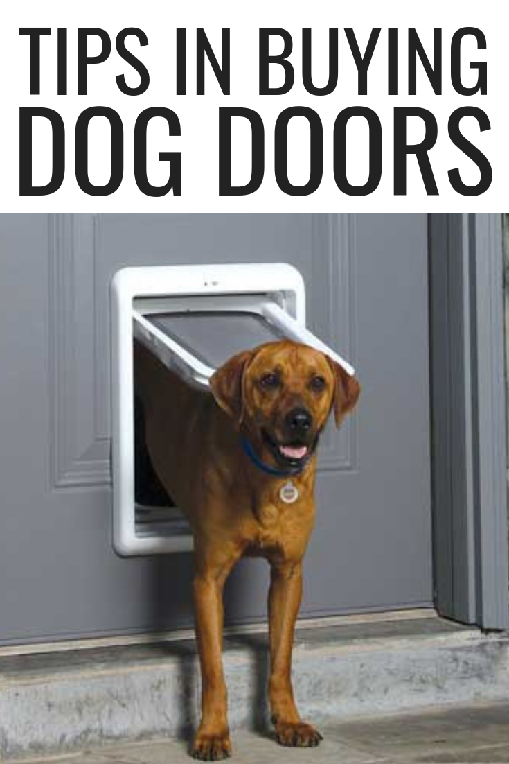Tips In Buying Dog Doors Dog Life Hacks Dog Health Tips Dog