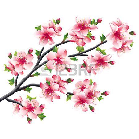Pink Cherry Blossoms Branch Japanese Tree Sakura Isolated On Cherry Blossom Drawing Cherry Blossom Art Apple Tree Flowers
