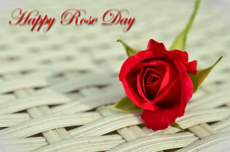 Red rose day images free download