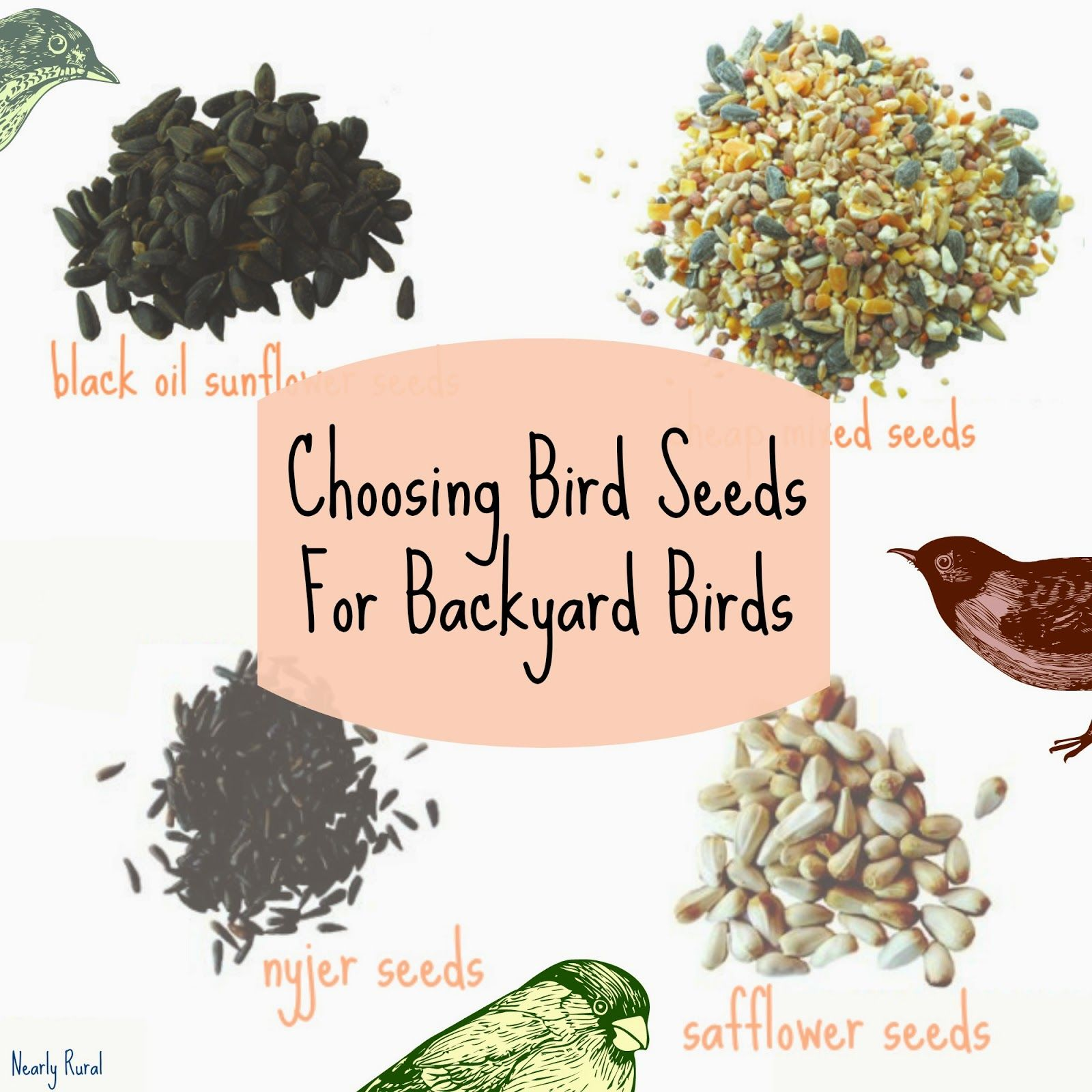 choosing bird seeds for backyard birds examples of bird seed
