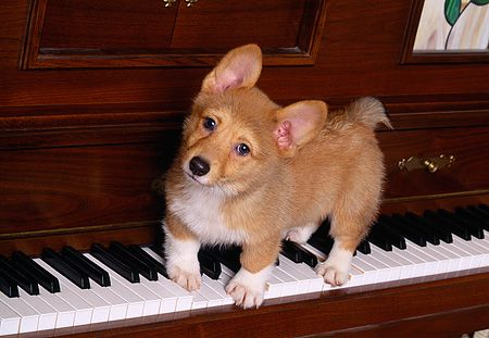 Image result for puppy piano